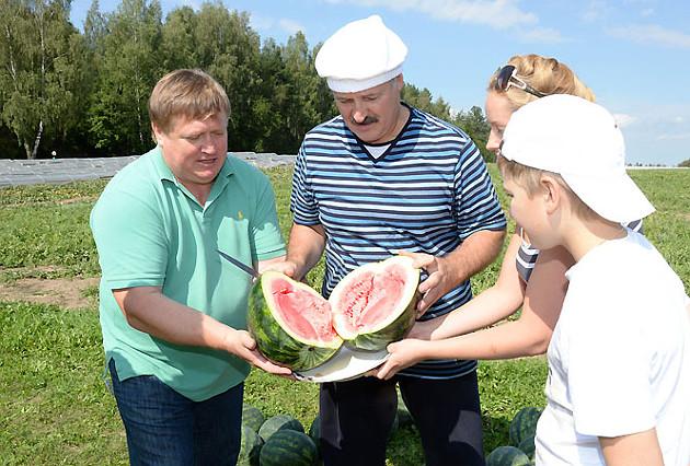 арбуз в беларуси