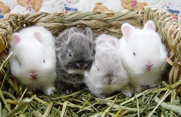 крольчата и арбуз