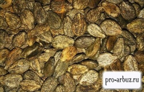 Допустимые сроки хранения семян арбуза