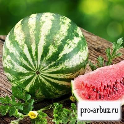 Как выращивать арбуз Ница