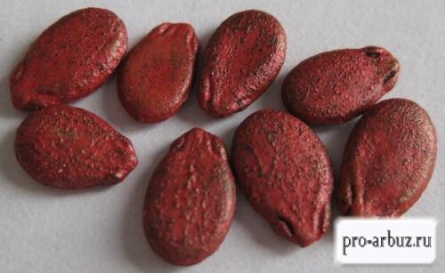 Надо ли замачивать обработанные семена арбузов
