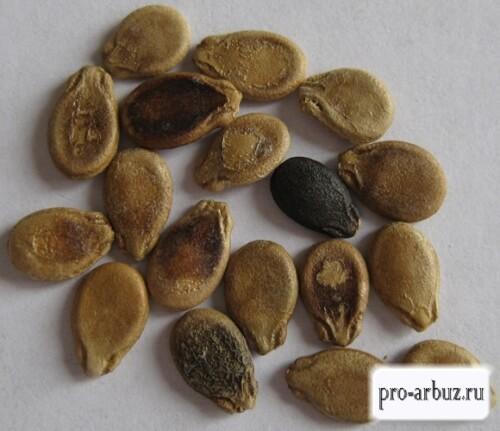 Семена арбуза Бочка мёда