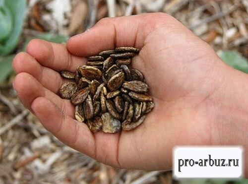Срок годности семян арбуза