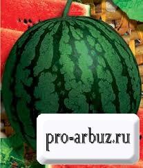 Выращивание арбуза Борчанский