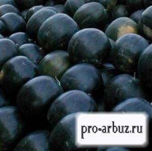 Выращивание арбуза Икар
