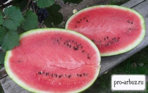 Выращивание арбуза Кримсон Вондер