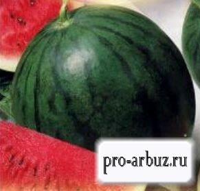 Выращивание арбуза Скорик