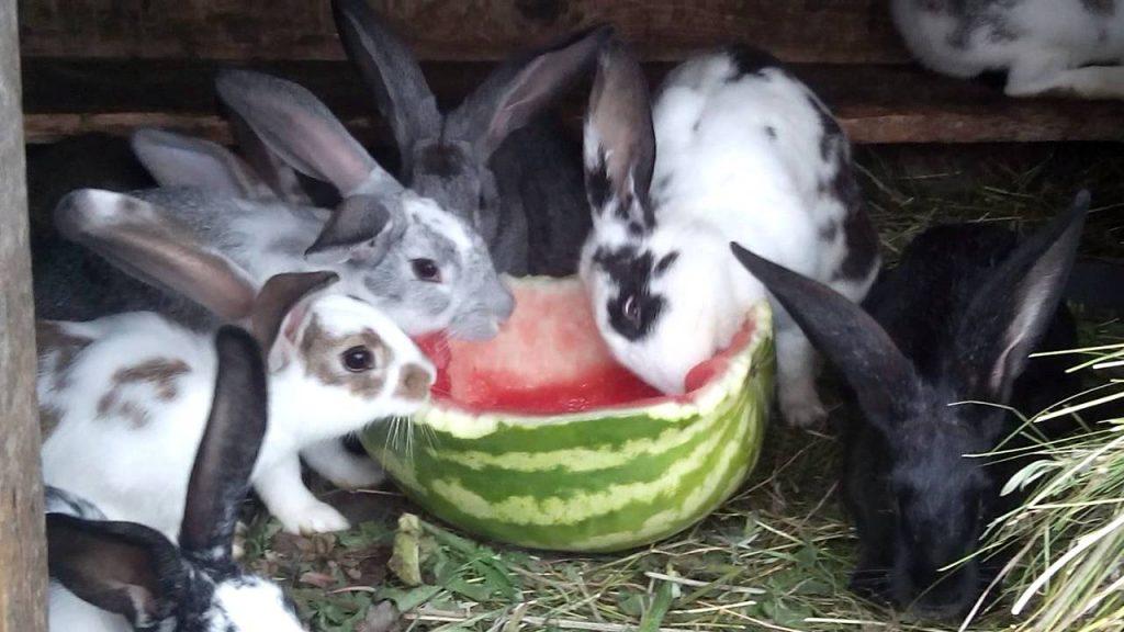 можно ли кроликам арбуз