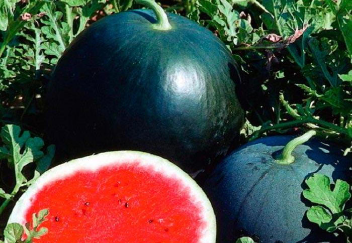 Арбуз огонек: выращиваем ягоду с огоньком