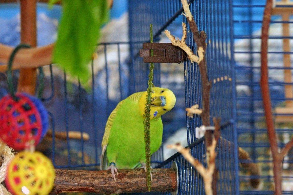 веточки для попугая