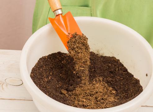 почва для арбузной рассады