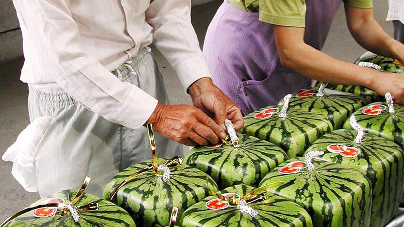 цена квадратного арбуза