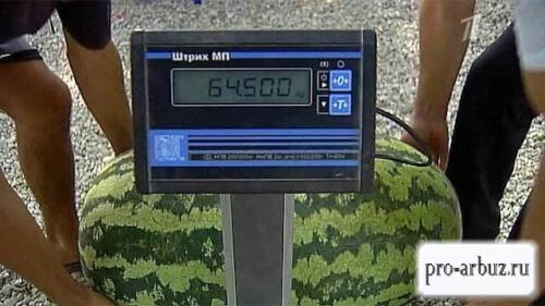 Арбуз Русский размер F1