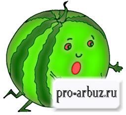 Арбуз это овощ