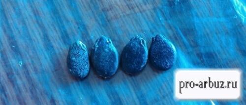 Нужно ли проращивать семена арбуза перед посадкой