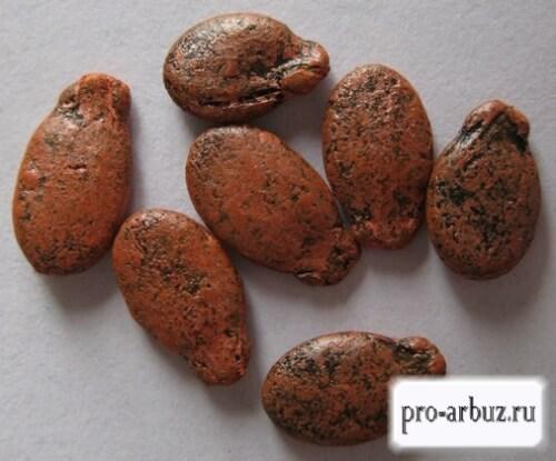 Обработанные семена высаживаются сухими