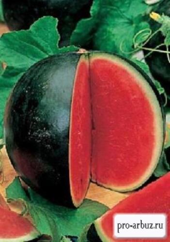Отзывы об арбузе Огонек