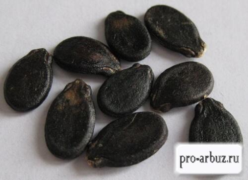 Семена арбуза Медовик
