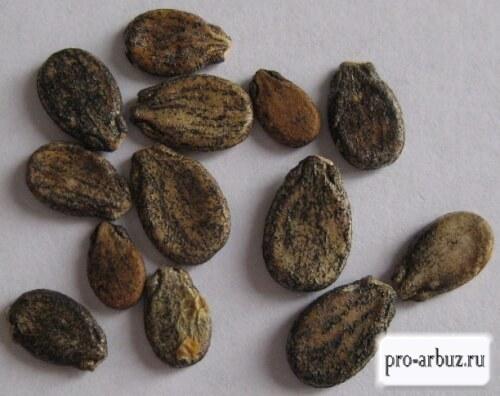 Семена арбуза Зенит