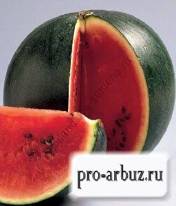Выращивание арбуза Шуга Бейби