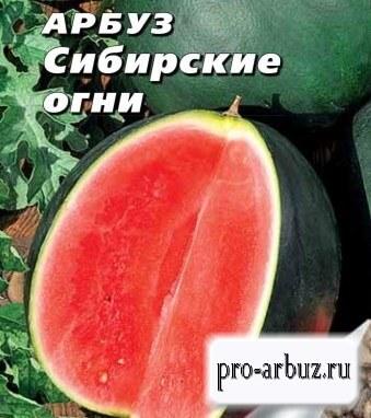 Выращивание арбуза Сибирские огни