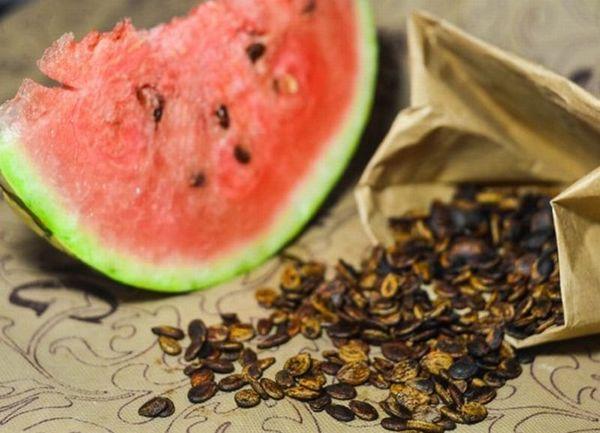 семена арбуза для поращивания
